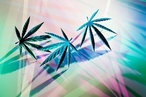 Die zwei Gesichter von Cannabis