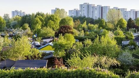 Baurecht für Kleingärtner: Die Lösung der Berliner Wohnungsnot?