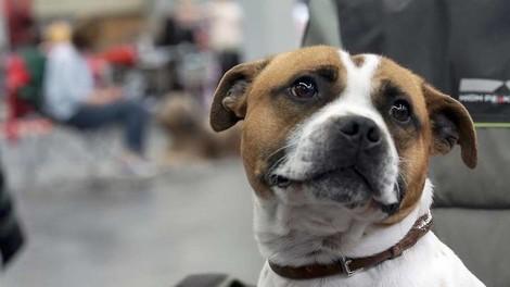 Streaming-Tipp: Wie gefährlich sind Kampfhunde? Eine Reise durch Hundedeutschland