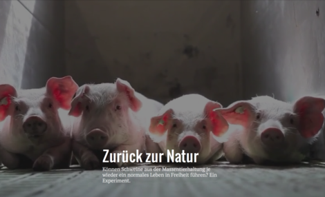 Schlamm und Schwein und großes Gewälze