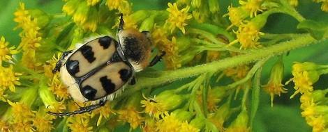 Eine brisante These zum #Insektensterben
