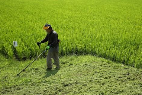 """Neu in der Reihe """"Jobs, die Roboter übernehmen werden"""": Bauern. In Japan. Wegen Arbeitskräftemangel."""