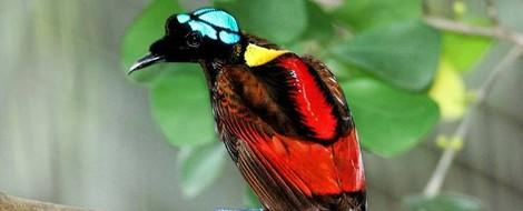 Das Paradiesvogel-Projekt