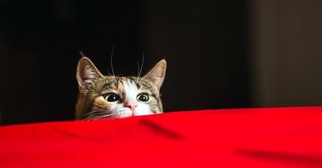 Warum wir Katzen für Psychopaten halten