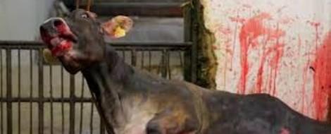 """""""Wer gegen Tiere grausam ist, kann kein guter Mensch sein"""" — zum Stand der Dinge"""