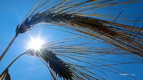Neuer Temperatur-Rekord im Juli