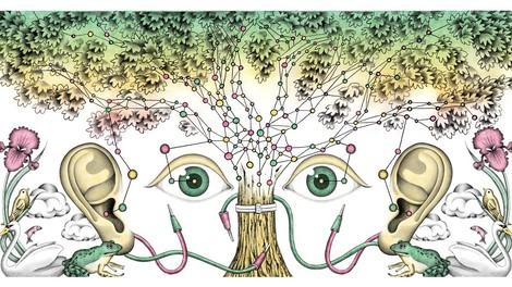 Wie Bäume atmen