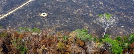 Warum der Amazonas lichter brennt denn je? — Weil wir gerne Rinder essen.