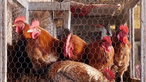 Warum Tierquälerei nur selten bestraft wird