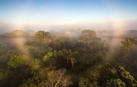 Verschlimmert der Amazonas-Regenwald heute schon die Klimakrise?