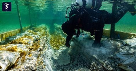 4.500 Jahre altes Ur-Boot im Bodensee entdeckt