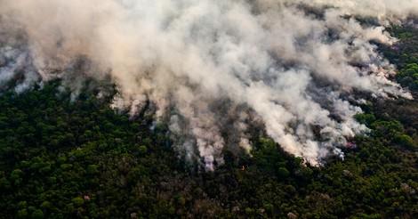 Die Abholzung tropischer Wälder nimmt zu – trotz Corona
