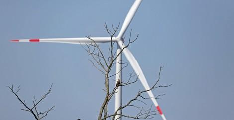 Debatte: Windenergie versus Artenschutz?