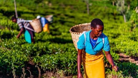 Neuordnung der EU-Handelsbeziehungen mit ostafrikanischen Ländern